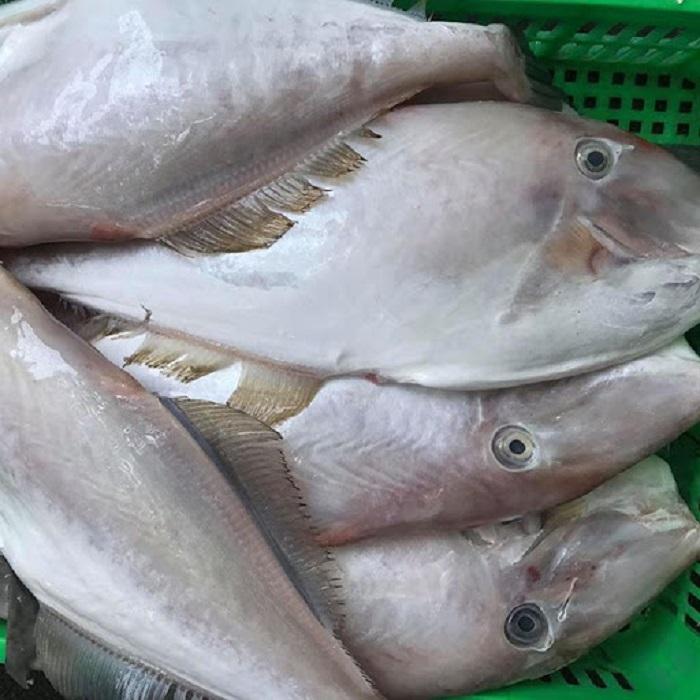 Hình dạng và đặc điểm của cá bò